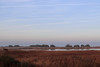 IMG_7253 (aliceziosi) Tags: comacchio valli valle nature landscape italy winter christmas canon blackandwhite horizon details sky