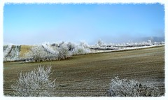 C'est l'hiver (Doonia31) Tags: hiver givre glace gel gelée campagne gers cultures agriculture agricole champ arbres blanc paysage froid