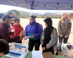 006 Sorting Things Out (saschmitz_earthlink_net) Tags: 2017 california orienteering vasquezrocks aguadulce losangelescounty laoc losangelesorienteeringclub