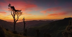 Reaching For The Sky (Jonathan Manning - Luminis Photography) Tags: trees sunrise sky lake forest sea sunset water light clouds ocean tree summer beautiful colour silhouette valley green panorama panoramic hilltop alpenglow newzealand southisland bankspeninsula