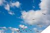 DSC_6819.jpg (kTomoyuki) Tags: 鷗 鴎 seagull カモメ かもめ 熊本市 熊本県 日本 jp