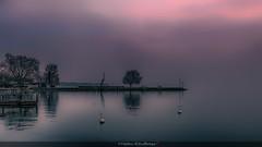 Contemplation... (Fred&rique) Tags: lumixfz1000 photoshop cameraraw hdr suisse nyon lac léman reflets arbres brume paysage nature eau miroir