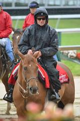 2015-05-21 (14) r2 outrider (JLeeFleenor) Tags: photos photography md marylandracing marylandhorseracing pimlico outrider horsepeople trackpeople horses thoroughbreds equine equestrian cheval cavalo cavallo cavall caballo pferd paard perd hevonen hest hestur cal kon konj beygir capall ceffyl cuddy yarraman faras alogo soos kuda uma pfeerd koin حصان кон 马 häst άλογο סוס घोड़ा 馬 koń лошадь rain maryland
