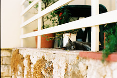 Croatian Cat (todmikaels) Tags: travel summer cats zeiss 50mm nikon europe slumber 14 croatia lazy carl fe2 zf2