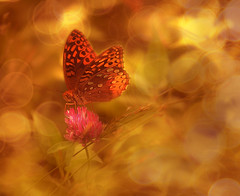 a little light in a butterfly's wings (irina_escoffery) Tags: