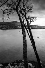 183/365 Loch Portree, Isle of Skye (Zed.Cat) Tags: trees seascape skye water scotland isleofskye loch portree lump