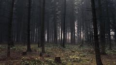 Gloomy Forests (Netsrak) Tags: forst natur nebel wald fog forest mist nature woods