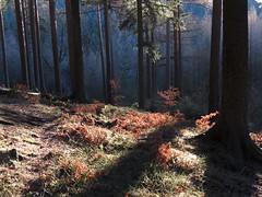 IMG_1019 (germancute) Tags: outdoor nature wald forest thuringia thüringen landscape landschaft tree baum