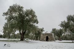 Paesaggio surreale (lulo92) Tags: snow neve tree olive ulivi raro rare cold freddo white bianco candido frozen verde forno furno salento puglia italia apulia lecce cannole samyanfg samyang nikon top