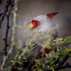 Peek (Portraying Life) Tags: unitedstates arizona handheld wild bird nativelighting pima