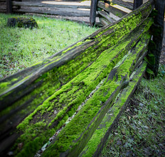 Rustic Rails (glo photography) Tags: california glenellenca gloriasalvanteglophotography hff happyfencefriday jacklondonstatepark northerncalifornia sonomacounty fence green moss rails rustic statepark winecountry wood fencefriday outdoor