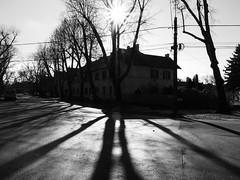 February sun (un2112) Tags: sun wekerle budapest hungary blackandwhite bw monochrome february g7