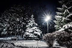 A(nother) Christmas postcard (Anthony P26) Tags: category eskisehir landscape nightscenes places snow turkey yunusemrecampus tree pinetree pine christmastree canon1585mm canon70d canon night lights lightstars lamps outdoor cold frozen freezing evening wow