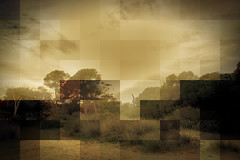 Natura Pixel (Ximo Torres) Tags: albufera natura