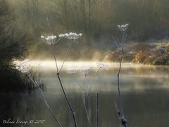 Winter Morning (Belinda Fewings (3 million views. Thank You)) Tags: belindafewings panasoniclumixdmc bokeh city street seaside colour colourful artistic pbwa creativeartphotograhy creative arty beautiful beautify beauty lovely outdoors outside out best depthoffield garden color colours colors interesting interest january riverstour winter river misty reflections reflecting reflect nature morning bournemouth dorset southcoastofengland