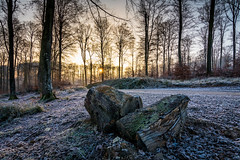 Forest sunrise (holding_justin) Tags: forest forêt sunrise leverdusoleil picardie picardy bois wood arbres trees givre frost winter hiver chemin track buches logs france europe feuilles ice glace aisne forêtderetz tokina1120