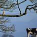 Barn Owl with high hopes (Terry Angus) Tags: owl barnowl cow prey