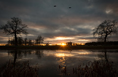 Last remaining light (cliveg004) Tags: croomepark croome nt nationaltrust worcestershire sunset water lake trees silhouette rays ice reeds ducks nikon d5200 outdoor countryside uk
