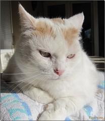 Aujourd'hui le thermomètre est remonté à 11 ° au soleil ... (Figareine- Michelle) Tags: chat fantastic nature coth5 bestofcats catmoments vg~catsgallery kittyschoice alittlebeauty coth