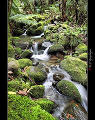 Browns River (vijayalayan) Tags: brownsriver ferntree tas