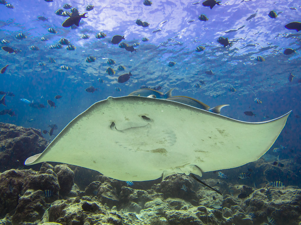 The World 39 S Best Photos Of Smile And Stingray Flickr