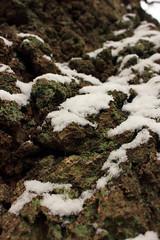 Rindenlandschaft (2) (Rüdiger Stehn) Tags: europa mitteleuropa deutschland germany norddeutschland schleswigholstein altenholz altenholzstift rinde schnee pflanze baum borke laubbaum