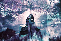 Umbrella Amethyst (Hayden_Williams) Tags: kyoto japan travel asia water wet pond rain umbrellas umbrella weather purple indigo violet lavender lake trees winter cold frozen doubleexposure multipleexposure analog analogue canonae1 lomography lomo lomochromepurplexr100400