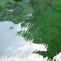 水様=Appearance of water-138/Fish in green ripples (kouichi_zen) Tags: ripple wave water nature green fish light abstract reflection