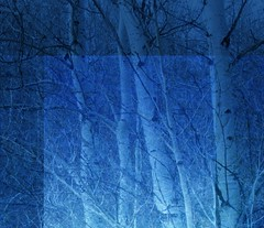 Mystery of the Forest (MaureenShaughnessy) Tags: blue trees winter tree collage mystery night 510fav forest photoshop glow seasons darkness ps dreaming digitalpainting mysterious moonlight layers aspen glimmer bluehue ghosttrees digitalpaintings digitalcollage reversal glowinglight ggss thememystery spirittrees geometrydream utatablue collagemix 0x20518e