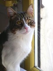 PICT0031 (Jiobbe) Tags: cats cat arthur kitten milo catsandwindows