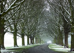 falling snow (algo) Tags: snow topv2222 photography topf50 topv555 bravo searchthebest gutentag topv1111 topv999 topv5555 avenue algo topv3333 topf100 topv6666 halton gtaggroup goddaym1 abigfave 123f75