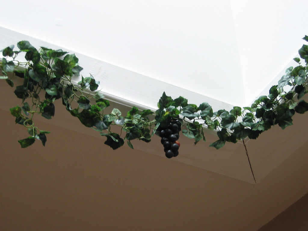 Skylight, vine, and grapes