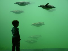 watching the penguins (rcvndnhvl) Tags: boy portrait green topf25 water glass animal animals swimming swim zoo penguin aquarium penguins topf50 topv555 topv333 underwater child topv444 explore pinguin 700views 1000views 555v5f 777v7f 999v9f 900v judgementday54 flickrsbest score54 1mill golddragon mywinners abigfave rcvndnhvl impressedbeauty 99comments