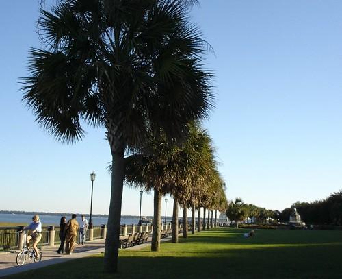 Palm Trees Best State Better Metropolitan City Vs