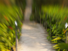 Down the Garden Path (eatzycath) Tags: tag3 taggedout garden singapore tag2 tag1 olympuse300 lensbaby20 alexandrahospital tccomp085 sgpow48 sgpow48embracetheblur