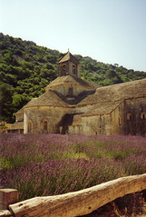 """Lavendar at the Abbey • <a style=""""font-size:0.8em;"""" href=""""http://www.flickr.com/photos/71572571@N00/118444404/"""" target=""""_blank"""">View on Flickr</a>"""