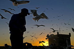 DSC_8074_Essaouira.jpg_resize (olopez) Tags: africa travel sunset silhouette backlight contraluz geotagged nikon d70 seagull morocco cap maroc marruecos essaouira 4ofakind nikonstunninggallery fivestarsgallery olopez abigfave oscarlpez