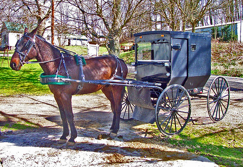 amish adamscounty horseandbuggy