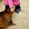tiny takes the love from gemma (sesame ellis) Tags: love girl cat toddler mykid year2 chucks