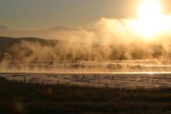 IMG_4241.JPG (jraiii) Tags: nature alaska deltajunction northpole