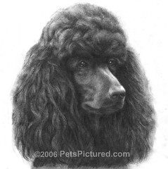 Rosie - Graphite Pencil Portrait by Susan Donley