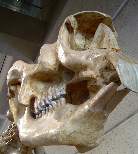 DSC04049 - diprotodon