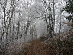 frosted path 01 (FotoFrom) Tags: tree forest fog outdoor landschaft landscape path pfad trail leaves winter