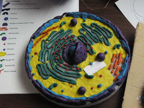 Student Cell Model