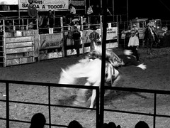 Falling (joaobambu) Tags: rodeo echapor echapora event