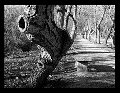 hole for my little secrets (Redsnap) Tags: tree hole arbol bw gothic dark