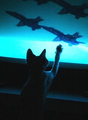 trying to catch fighter planes on TV (Vina the Great) Tags: sphynx hairless cat tv play ps otherwise nora