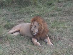 HPIM1497 (http://jvverde.birdsby.me/v2/) Tags: kenya qunia viagens frias travel africa