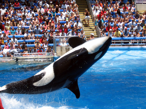 Shamu at Seaworld, Texas