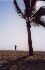 Silhouettes on a beach in Xiamen, Fujian Province, China (jenschmen) Tags: china tree beach silhouette tag3 taggedout tag2 tag1 fb palm xiamen fujian zhongguo